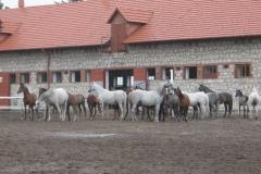 Kielce003